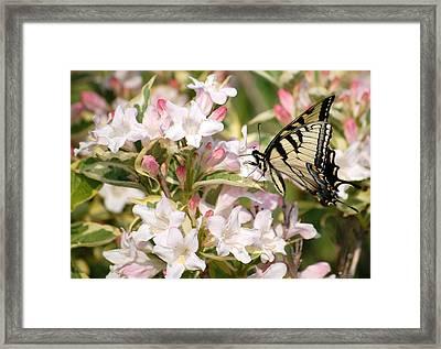 Spring Visit Framed Print