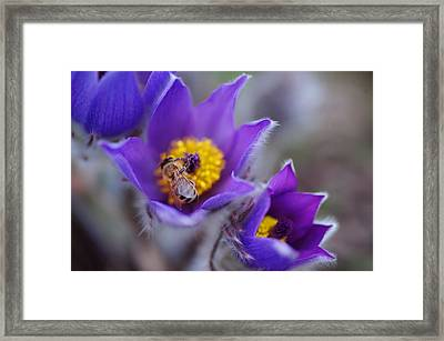 Spring Visitor Framed Print by Jenny Rainbow