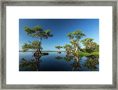 Spring Vistas At Lake Disston Framed Print