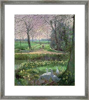 Spring Walk Framed Print by Timothy Easton