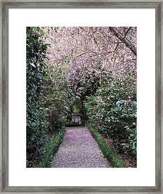 Spring Walkway Framed Print by Geoff Bryant