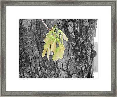 Spring Whirligig Framed Print