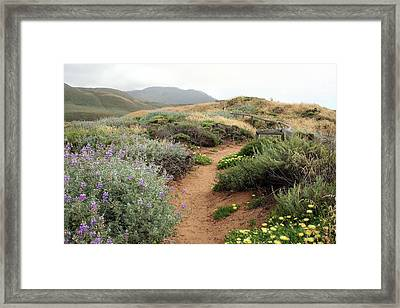 Spring Wild Flowers Framed Print by Michael Rock