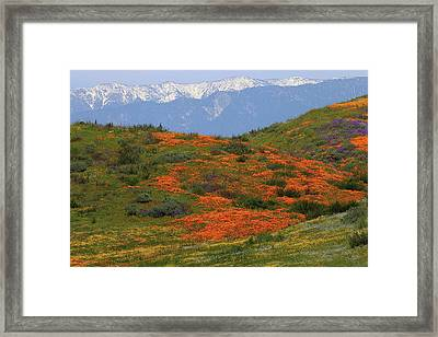 Framed Print featuring the photograph Spring Wildflower Display At Diamond Lake In California by Jetson Nguyen