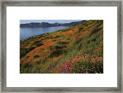 Framed Print featuring the photograph Spring Wildflower Season At Diamond Lake In California by Jetson Nguyen