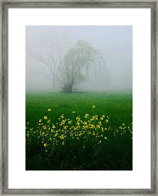 Spring Wildflowers Framed Print