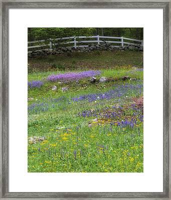 Spring Wildflowers Framed Print