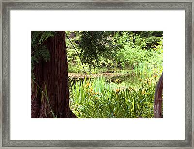 Spring Woodland Framed Print by Victoria Harrington