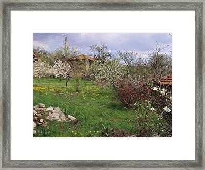 Spring Yard Framed Print by David Du Hempsey