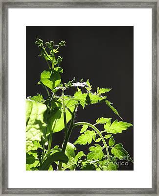 Spring103 Framed Print