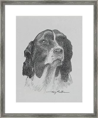 Springer Framed Print