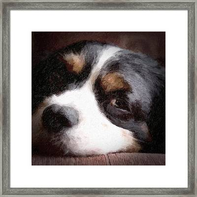 Springer Spaniel Framed Print by Tom Mc Nemar