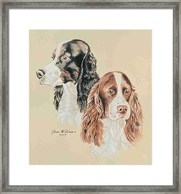 Springer Spaniels Framed Print by Joan Williams