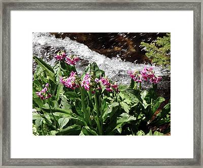 Springflowers Framed Print by George Tuffy