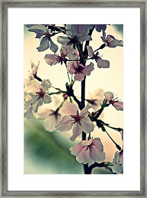 Spring's Delicate Dance Framed Print