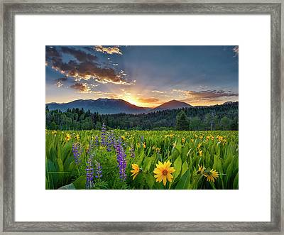Spring's Delight Framed Print