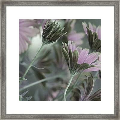 Spring's Glory Framed Print by Bonnie Bruno