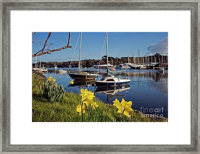 Springtime At The Creek Framed Print by Terri Waters