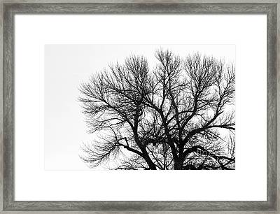 Springtime Before The Buds Framed Print