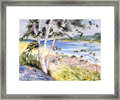Springtime Birches Framed Print