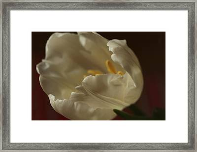 Springtime Classic Framed Print by Connie Handscomb