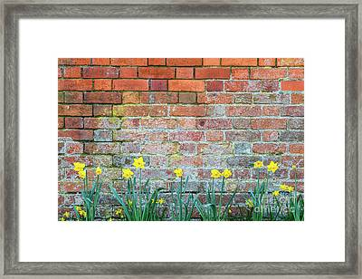 Springtime Daffodils Framed Print