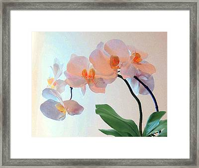 Springtime Delight 2 Framed Print