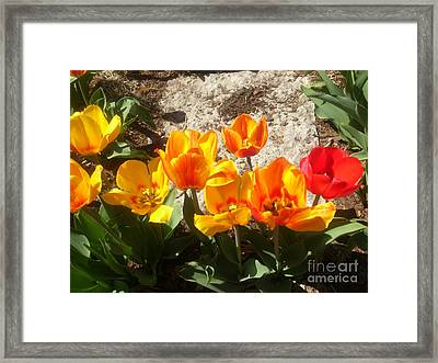 Springtime Flowers Framed Print