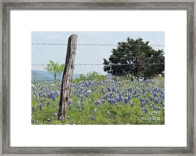 Springtime For Texas Framed Print by Joe Jake Pratt