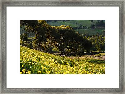 Springtime Glory Framed Print by Georgiana Romanovna
