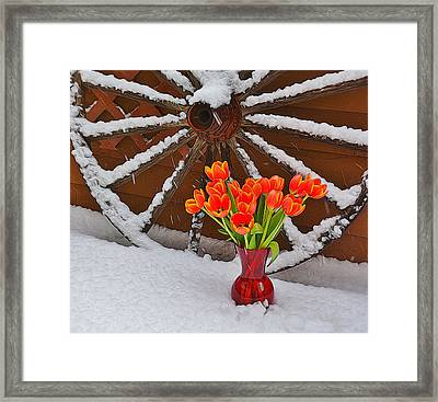 Springtime In Colorado Framed Print