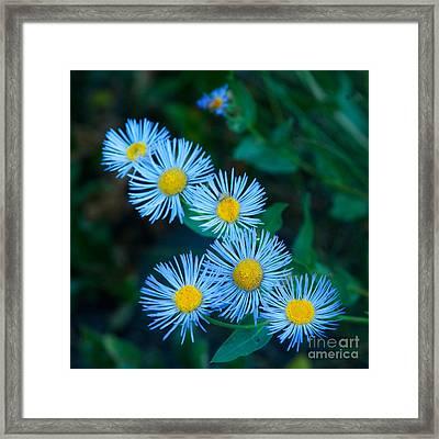 Springtime In Grand Teton Framed Print by Sandra Bronstein