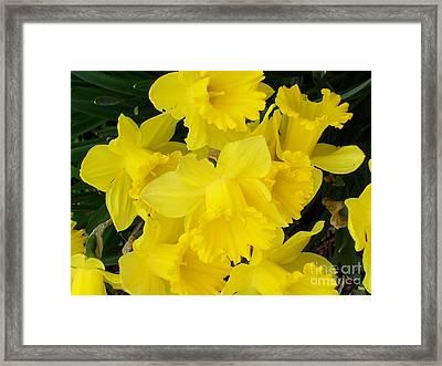 Springtime In Ireland Framed Print by Patrick J Murphy