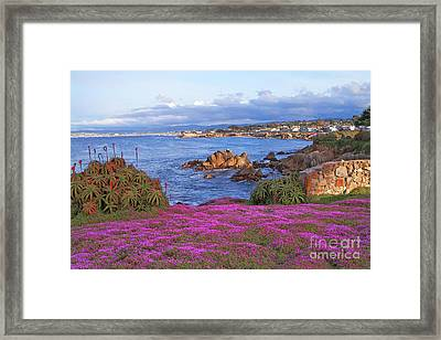 Springtime In Pacific Grove Framed Print