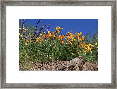 Framed Print featuring the photograph Springtime In Southern California by Cliff Wassmann