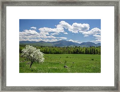 Springtime In Sugar Hill Framed Print
