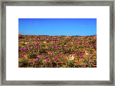 Framed Print featuring the photograph Springtime In The Sonoran Desert by Robert Bales