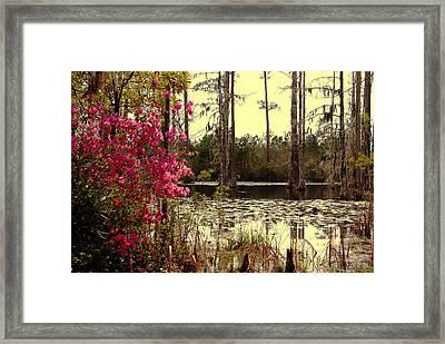 Springtime In The Swamp Framed Print by Susanne Van Hulst