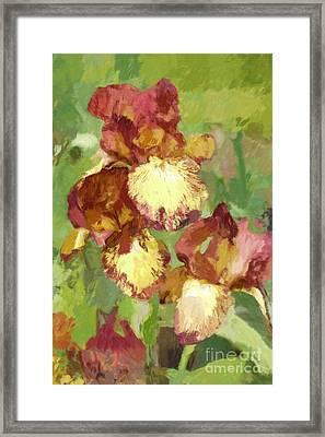 Springtime Iris Framed Print by Susan  Lipschutz