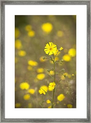 Springtime Framed Print by Jim Dohms