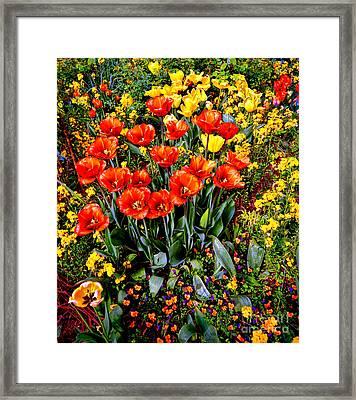 Springtime Framed Print by Olivier Le Queinec