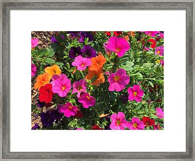 Springtime On The Farm Framed Print