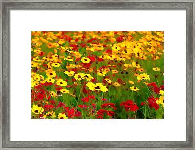 Springtime Framed Print