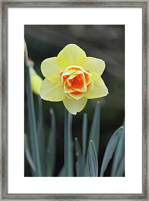 Springtime Framed Print by Pierre Leclerc Photography