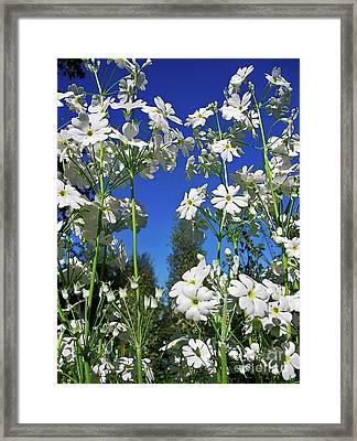 Springtime Primrose Framed Print by Kaye Menner
