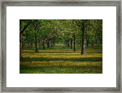 Springtime Through The Pecan Trees Framed Print