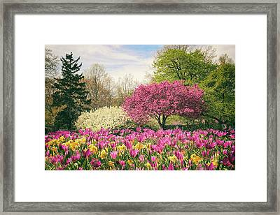 Framed Print featuring the photograph Springtime Tulips by Jessica Jenney