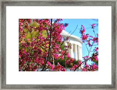 Framed Print featuring the photograph Springtime Vibe by Mitch Cat