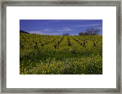 Springtime Vineyards Sonoma Framed Print by Garry Gay