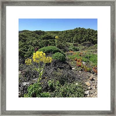 Springtime Wildflowers Along Coastal Hiking Trail - Portugal Framed Print by Connie Sue White